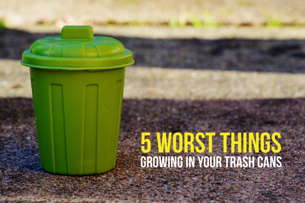 "A Trash Can Next to the Title ""5 Worst Things in your Trash Can"