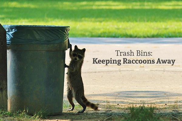"A raccoon about to climb into a trash can beside the words ""Trash Bins: Keeping Raccoons Away"""